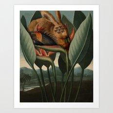 Class V. Pentandria Art Print