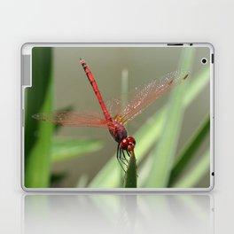 Beautiful Red Skimmer or Firecracker Dragonfly Laptop & iPad Skin