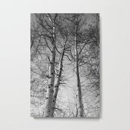 Birch Tree Photography Forest Art Metal Print