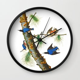 White-breasted Black-capped Nuthatch Bird Wall Clock