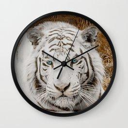 WHITE TIGER GAZE Wall Clock