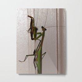 Mantis pose Metal Print
