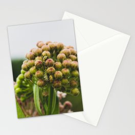 Monarch Caterpillar Stationery Cards