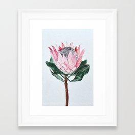 King Protea Framed Art Print