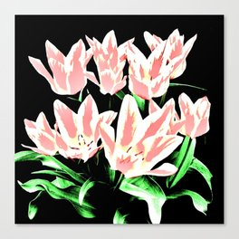 Rose White Tulpis on black Background Clipart Canvas Print