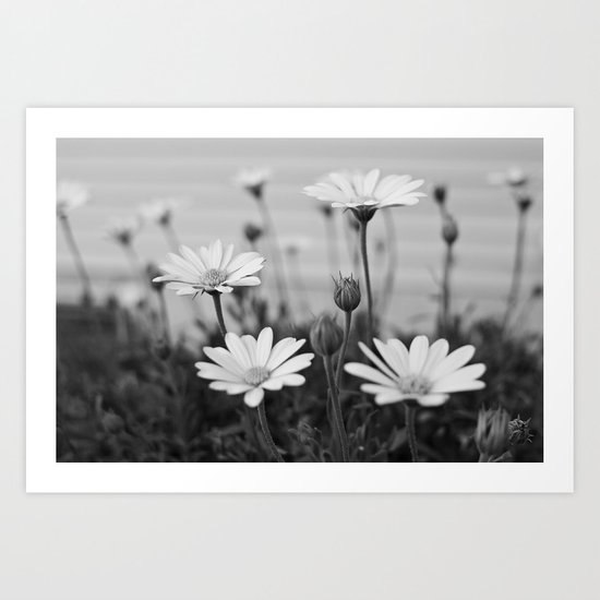 Backyard Daisies Art Print