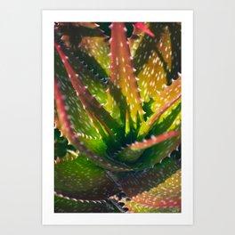 Red Green Succulent Art Print