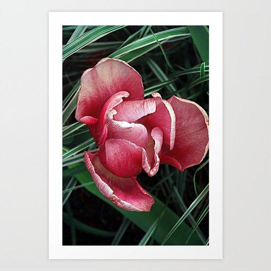 Vintage tulips(6) Art Print