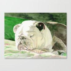 Rufus the Bulldog Canvas Print
