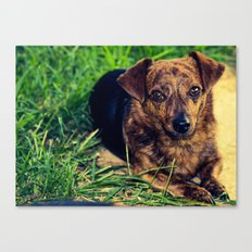 Mr.Regal  Canvas Print