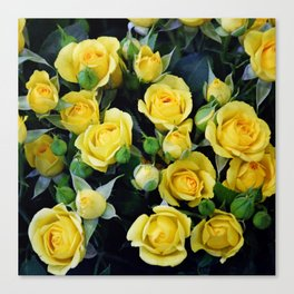 Bright Yellow Roses Canvas Print