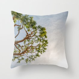 Maritime pine in French Riviera in a sunny winter day Throw Pillow