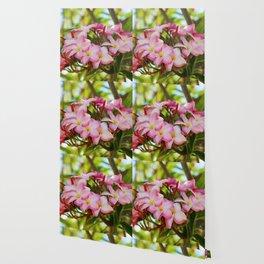 Pink Plumeria Wallpaper