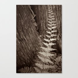 Single Copper Fern Canvas Print