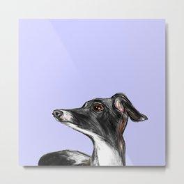 Italian Greyhound Illustration Metal Print