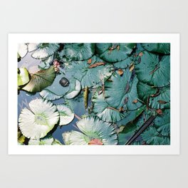 Pond in Macao Art Print