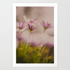 Hidden Beauty Art Print