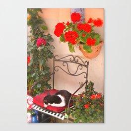 Italian Cat-Cinque Terra Canvas Print