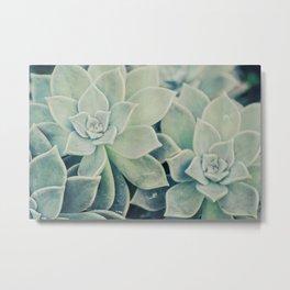 Botanical -- Jade, Mother-of-pearl, Ghost Plant Leaves Metal Print