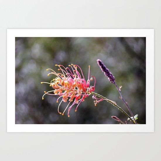 Australian Native (Grevillea) Art Print