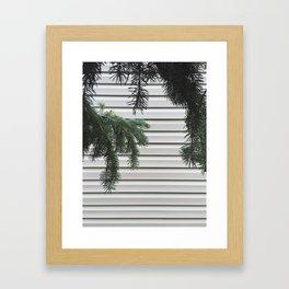 Hanging Pines Framed Art Print
