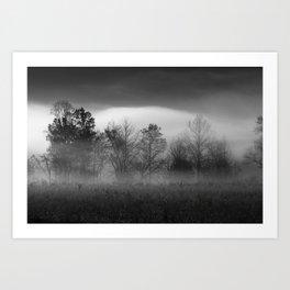 Morning Mist in Trees Art Print