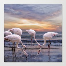 Flamingos feeding Canvas Print