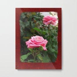 Pink Roses in Anzures 5  Blank P5F0 Metal Print