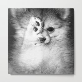 Vogue Pomeranian Metal Print