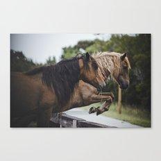 jumping ponies Canvas Print