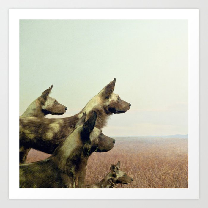 Hi, we are the wild dogs Art Print