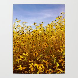 Bright bold yellow daisy blooming edge in summer against blue sky Poster