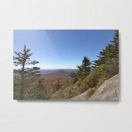 Pine Trees in an alpine landscape Metal Print