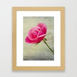 Virgin Rose Framed Art Print