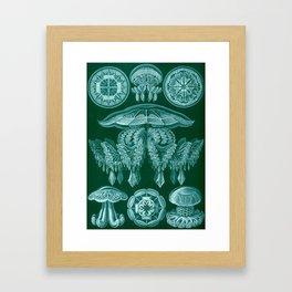 Vintage Discomedusae Print by Ernst Haeckel, 1904 Educational Chart Framed Art Print