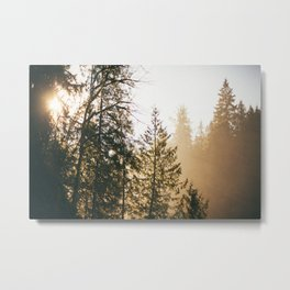 Northwest Forest Metal Print