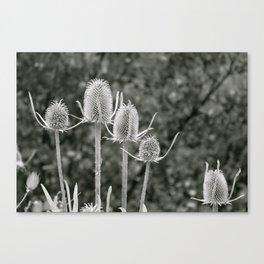Delicately Rough  Canvas Print
