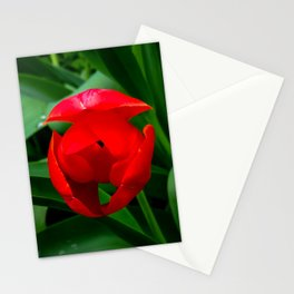 Tulip in Bloom Stationery Cards