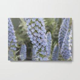 Longwood Gardens Orchid Extravaganza 52 Metal Print