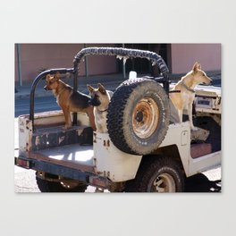 Jeep Dogs Canvas Print