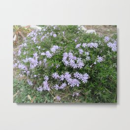 A Bushel of Purple Flowers Metal Print