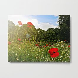 Sun kissed poppies Metal Print