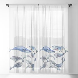 Whales, Whale design, whale wall art, sea, marine aquatic animal art, school learning wall Sheer Curtain