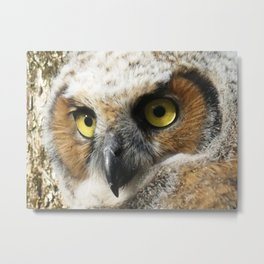 Young Owl close-up Metal Print