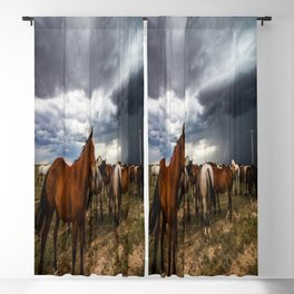 Pride - Horse Watches Over Herd as Storm Approaches Blackout Curtain
