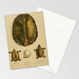 Turtles emys viridis emys amazonica ovum emys amazonica5 Stationery Cards