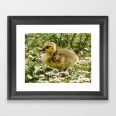 Fluffy Gosling Framed Art Print