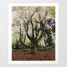 Forest Magic Art Print