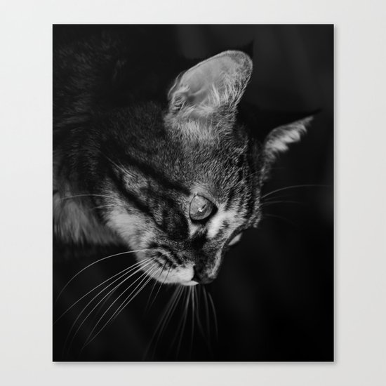 kitten in black and white Canvas Print