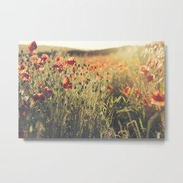 Wildflower Poppy Fields. Metal Print